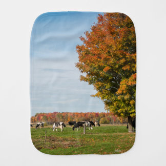 photograph of cows with tree burp cloth