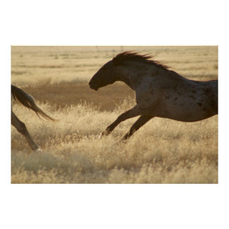 PHOTOGRAPH OF WILD HORSE POSTER