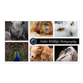 Photographe de photographie de faune carte de visite standard