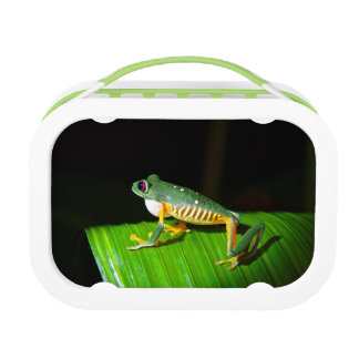 Photographic Red-Eyed Tree Frog Kids Lunchbox