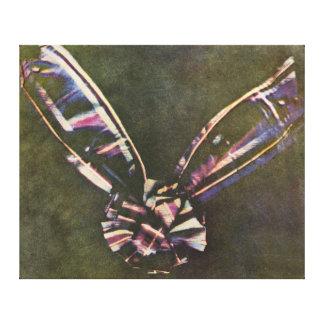 Photographie d'abord connue de couleur de ruban de toiles tendues