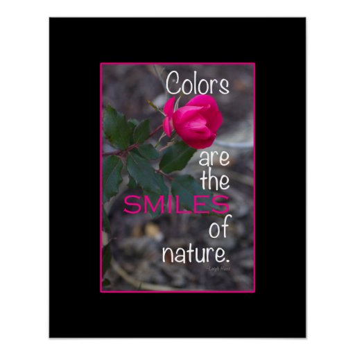 Photographie de recourbement simple de rose de ros affiche