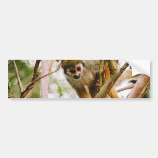 Photographie de singe-écureuil autocollant de voiture