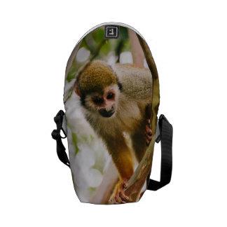 Photographie de singe-écureuil besace