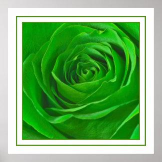 Photographie verte abstraite de centre de rose poster