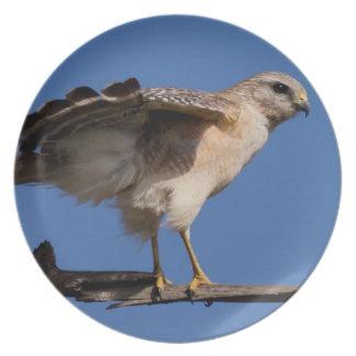Photographs : birds - plates