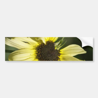 Photographs of a Sunflower on a T Shirts Bumper Sticker