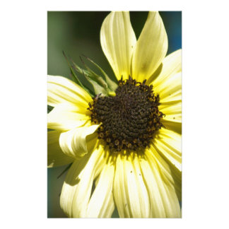 Photographs of a Sunflower on a T Shirts Stationery