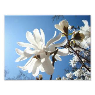 Photography art prints Blue Sky Magnolia Flowers