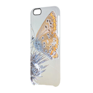 Photography butterfly putting in desert flower clear iPhone 6/6S case