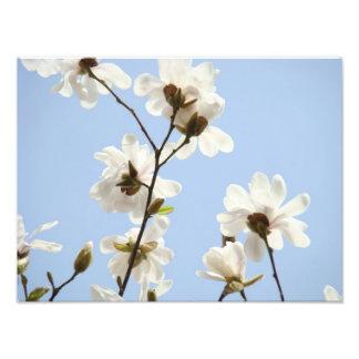 Photography Floral art prints Magnolia Flowers Photo Art