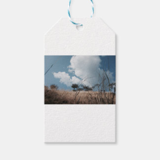 Photography landscape gift tags