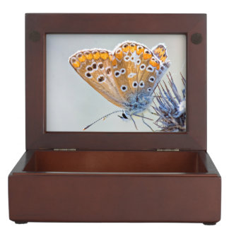 Photography of butterfly in smooth colors keepsake box