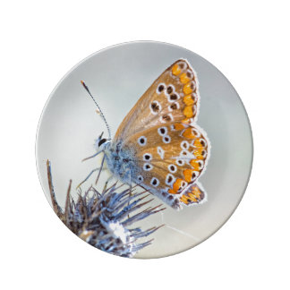 Photography of butterfly on flower of the desert porcelain plate