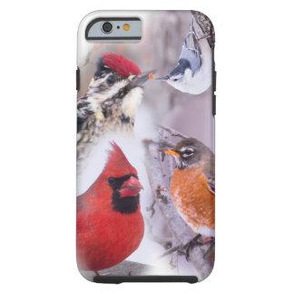 Photography of Winter Birds Tough iPhone 6 Case