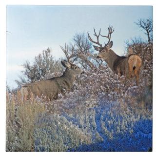 Photography photoshop wildlife art tile