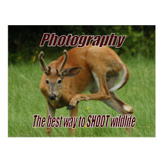 Photography, The best way to SHOOT wildlife Postcard