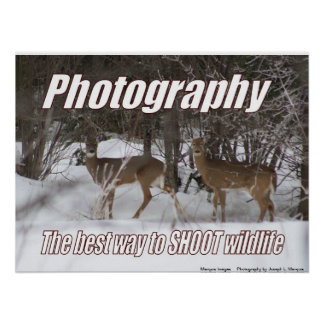 Photography, the best way to SHOOT wildlife Poster