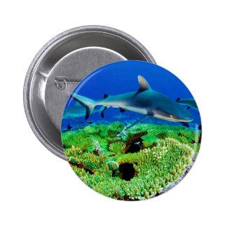 Photos de requin de récif macaron rond 5 cm
