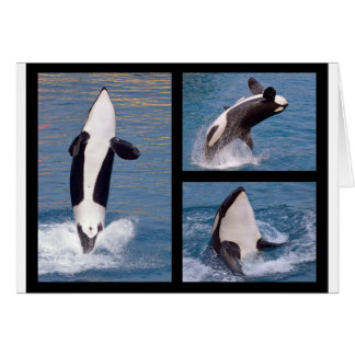 Photos mosaic of killer whales card
