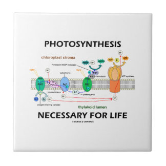 Photosynthesis Necessary For Life Light-Dependent Ceramic Tiles