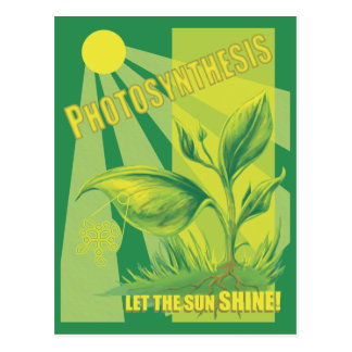 Photosynthesis Postcard