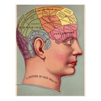 Phrenology Head in Color Postcard