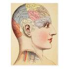 Phrenology Head - Vintage Post Card