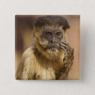 Piaui, Brazil, Brown Capuchin, Cebus apella, 2 Inch Square Button