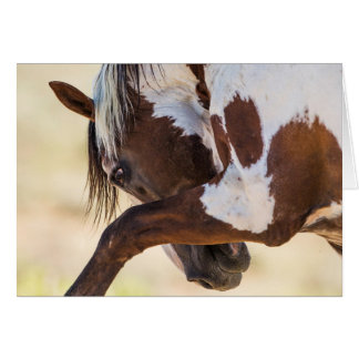 Picasso Strikes Wild Horse Greeting Card