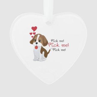 Pick me - cute puppy