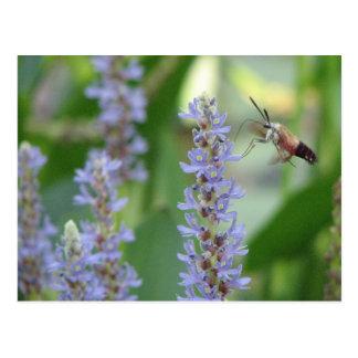 Pickerel and Moth Postcard