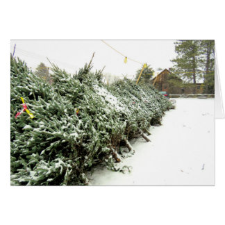 Picking your own Christmas Tree Card
