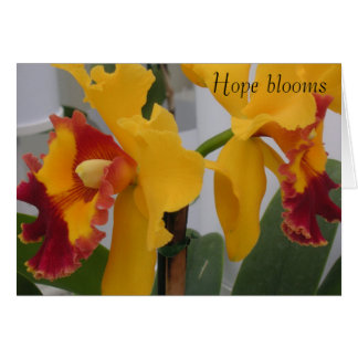 PICT0396, Hope blooms Card