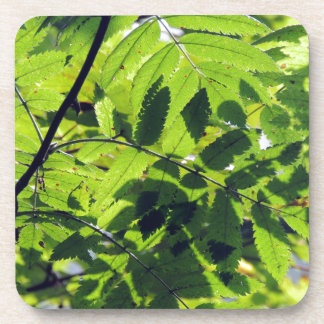 PICTURE 127 BEVERAGE COASTERS