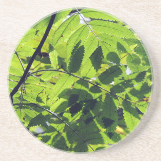 PICTURE 127 DRINK COASTERS