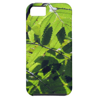 PICTURE 127 iPhone 5 COVER
