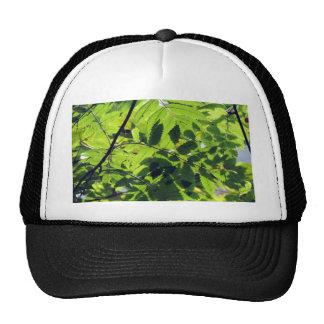 PICTURE 127 TRUCKER HAT