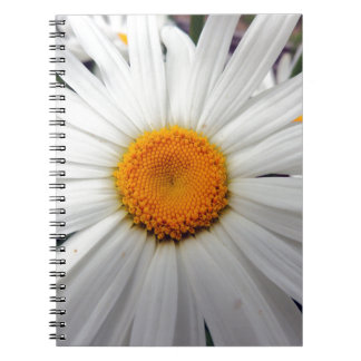 PICTURE 253 NOTEBOOK