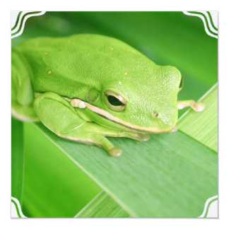 Picture of a Tree Frog Invitations