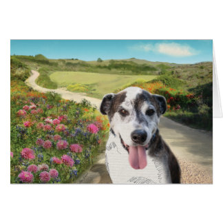 Pie in a Field of Dahlias (Dog on path blank card) Card