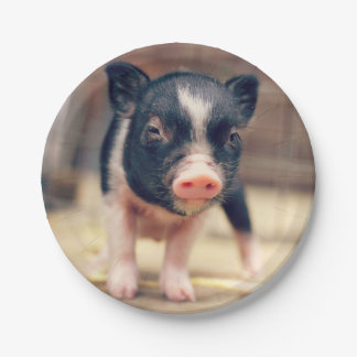 Piebald Pig puppy for Pig Lovers Paper Plate
