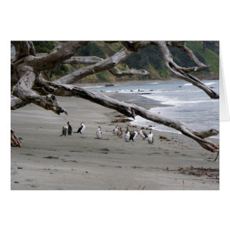 Pied Shags on the Beach Card