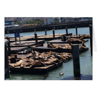 Pier 39 San Francisco California Card