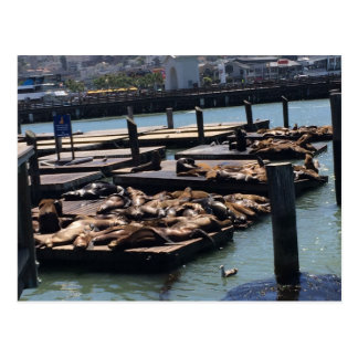 Pier 39 San Francisco California Postcard