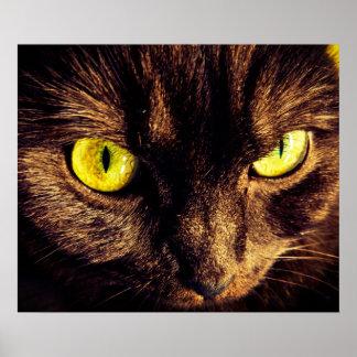 Piercing Gaze Munchkin Cat Poster