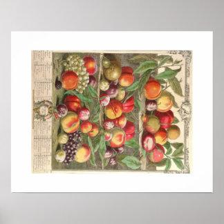 Pieter Casteels, Twelve Months of Fruits, August Poster