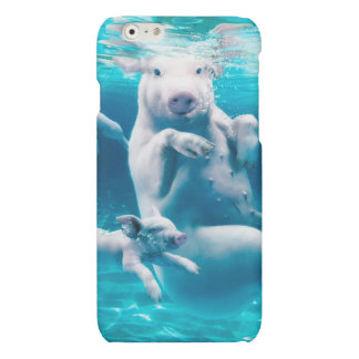 Pig beach - swimming pigs - funny pig