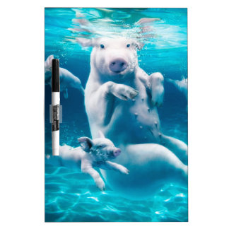 Pig beach - swimming pigs - funny pig dry erase boards