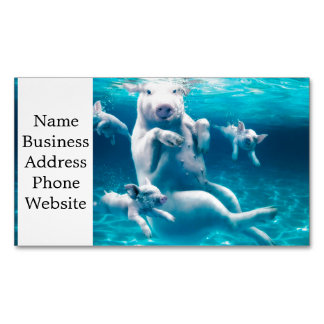 Pig beach - swimming pigs - funny pig 	Magnetic business card